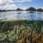 """""""La terra è un paradiso l'inferno è non accorgersene"""": Giornata Mondiale dell'Ambiente 2020"""