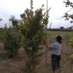 Protezione ambientale dell'autostrada A4: oltre 1200 piante nelle nuove aree boscate