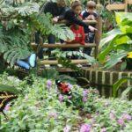 Farfalle nella testa, a Bordano volontari da tutto il mondo a scuola di cooperazione