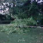 Piogge e temporali in serata e nella notte, 150 interventi e 100 volontari impegnati per allagamenti e cadute di alberi