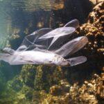 Il 25 settembre la I edizione della Giornata della pesca alla plastica promossa da Assonautica Trieste